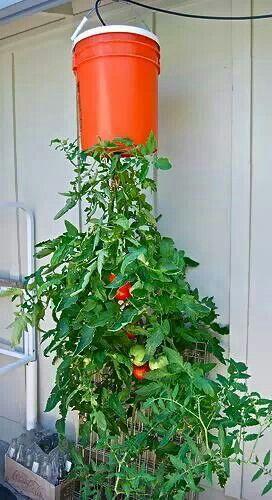 5 gallon bucket gardening pinterest - Gallon bucket garden container ...