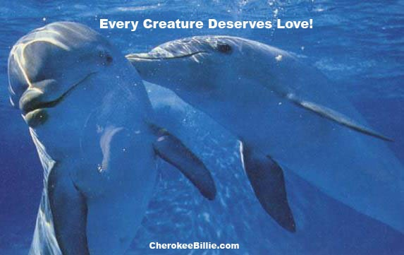 Image result for Dolphin Kisses