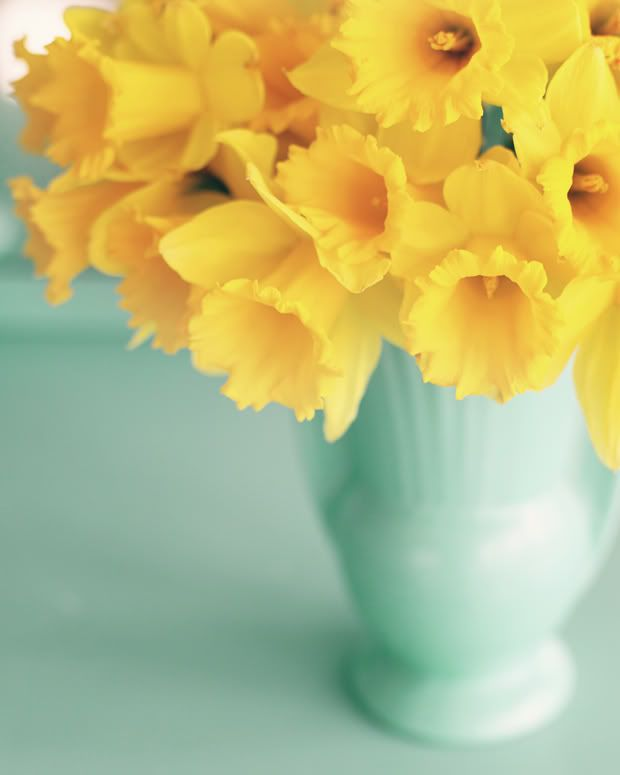 Turquoise vase of brilliant yellow daffodils. This reminds me of the sun bursting through an endless spring sky.