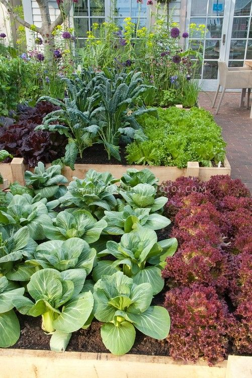 Raised Bed Gardening Outdoor Living Pinterest