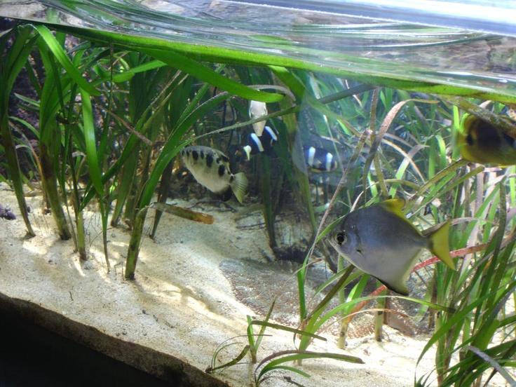 Outdoor aquarium aquarium pinterest for Outdoor fish aquarium