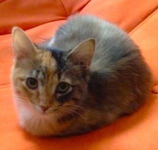 Cutie Pie, Kitten Waif.