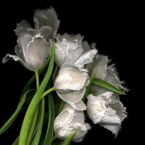 I would love to use a few of the fringed tulips. so romantic & soft