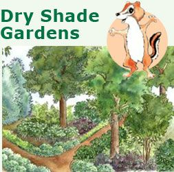 native plants and plans dry shade Garden Ideas Pinterest