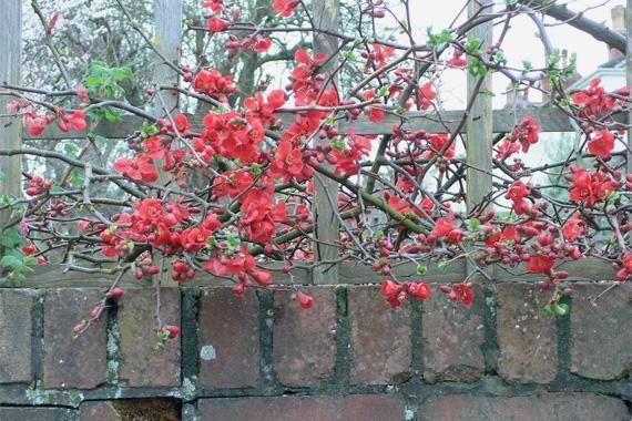 winter plants fall and winter gardening ideas houselogic
