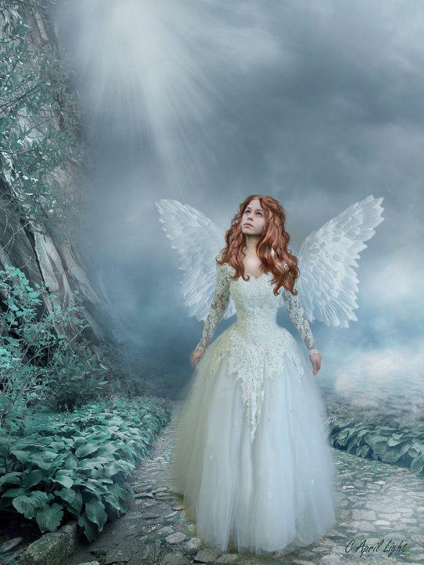 Lost Angels Net Worth