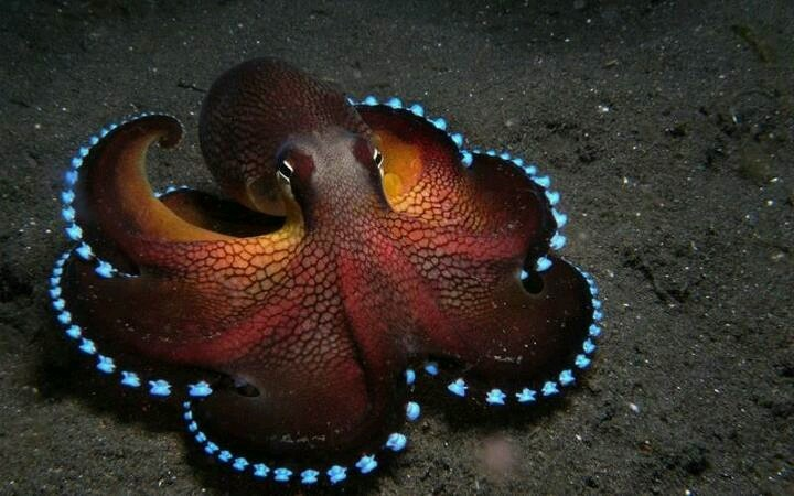 Cephalopods Strange Creatures and Pretty Creatures Pinterest