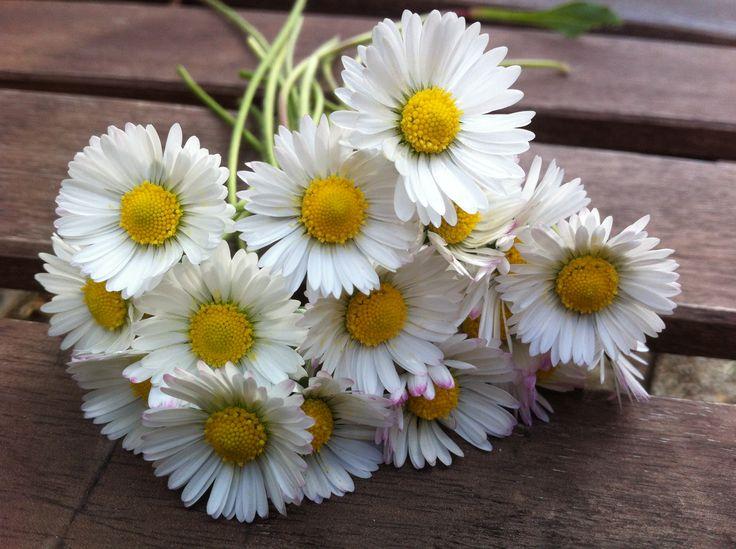 Résultat d'images pour Bouquets de marguerites