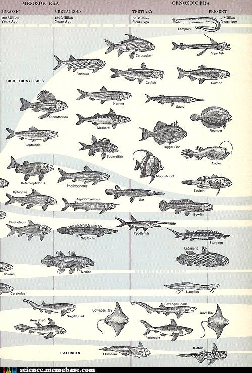 Prehistoric fish for The history of fish