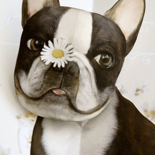 Boston Terrier greetingn card by crankbunny @ Etsy