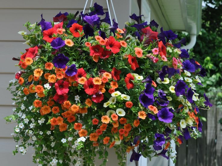 Flowers For Baskets For Hanging : Summer flowers hanging basket