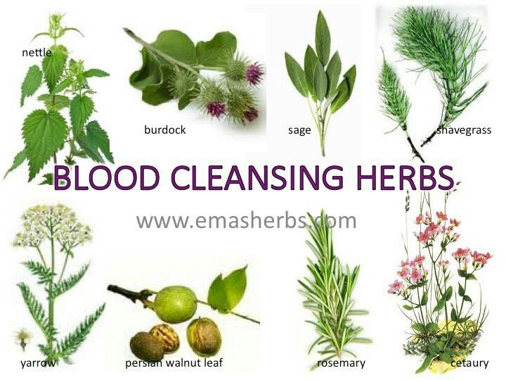 blood cleansing herbs