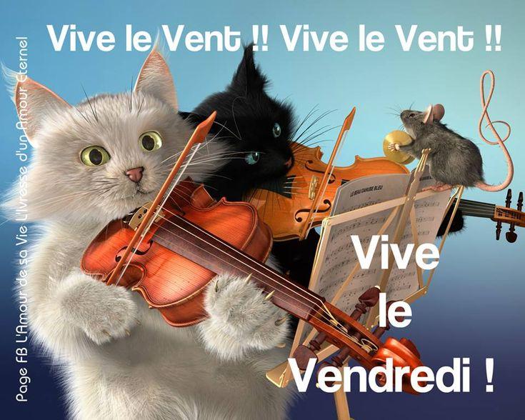 i.pinimg.com/736x/56/f2/84/56f28483a4c1910ec5627096276e336c--music-background-white-cats.jpg