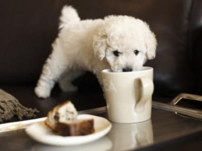 15 Best Small Dog Breeds For Indoor Pets