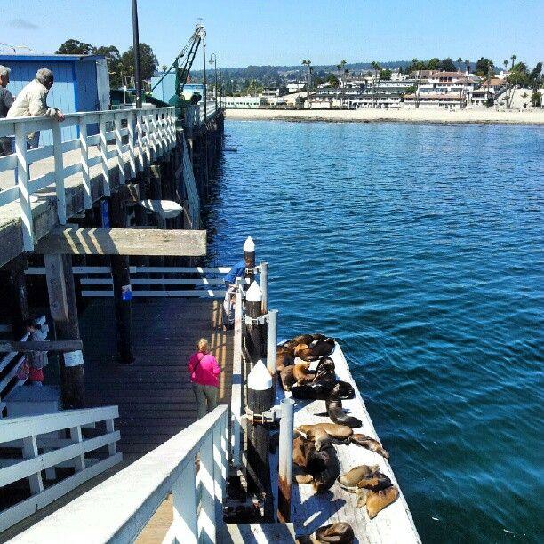 Santa cruz wharf for Santa cruz fishing