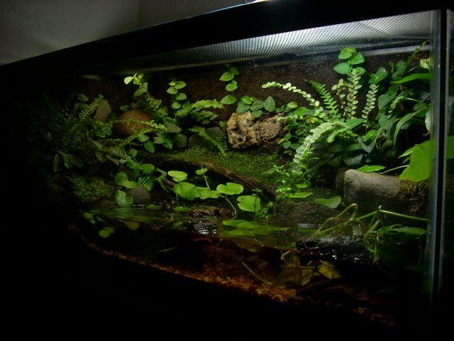 Whites Tree Frog Tank