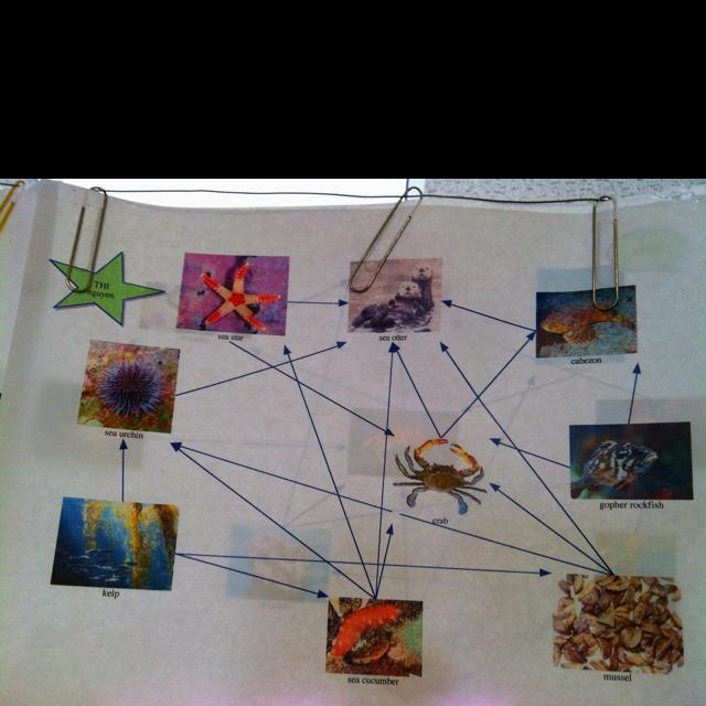 Ocean food web project using the inspiration program & Internet ...