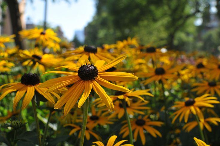 Late Summer Flowers Summer Pinterest