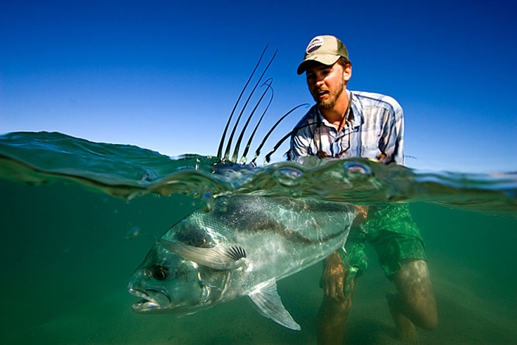 Rooster fish cabo san lucas mx rooster fish pinterest for Rooster fish cabo