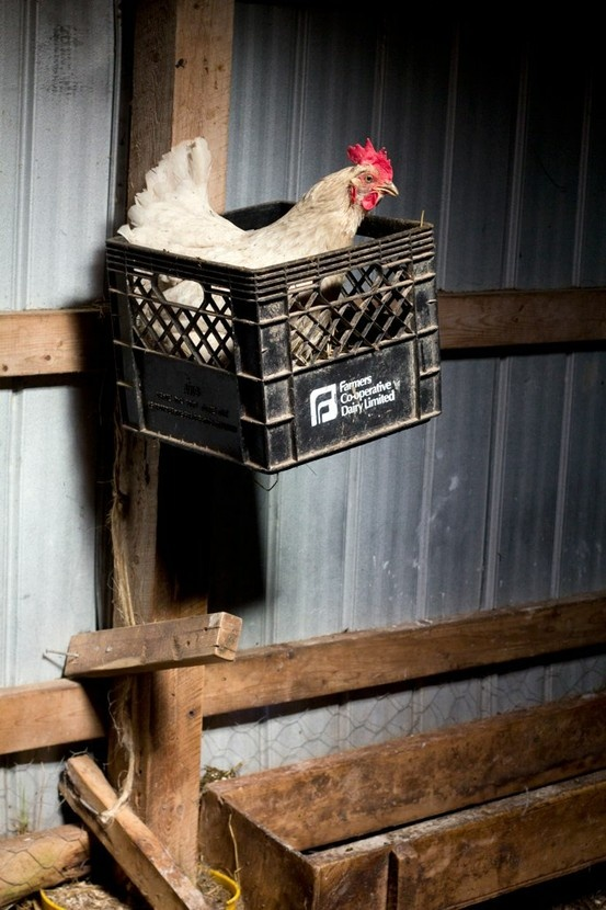 These make great chicken nests.