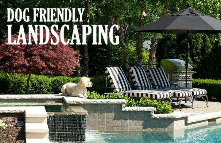 ~ Dog Friendly Backyard Landscaping