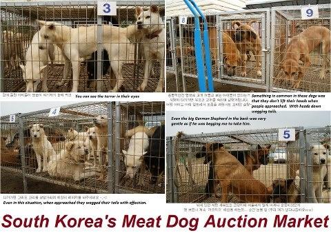 Stop Dog Eating Petition Gov Uk