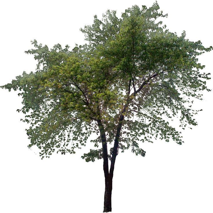 landscape graphics on Pinterest | Fall Trees, Shrubs and Trees: https://pinterest.com/natarudj/tree-png