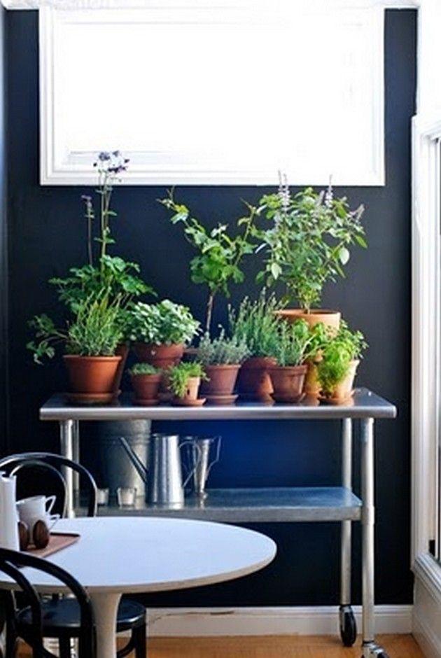 Kitchen Herb Garden | Home Sweet Apartment | Pinterest