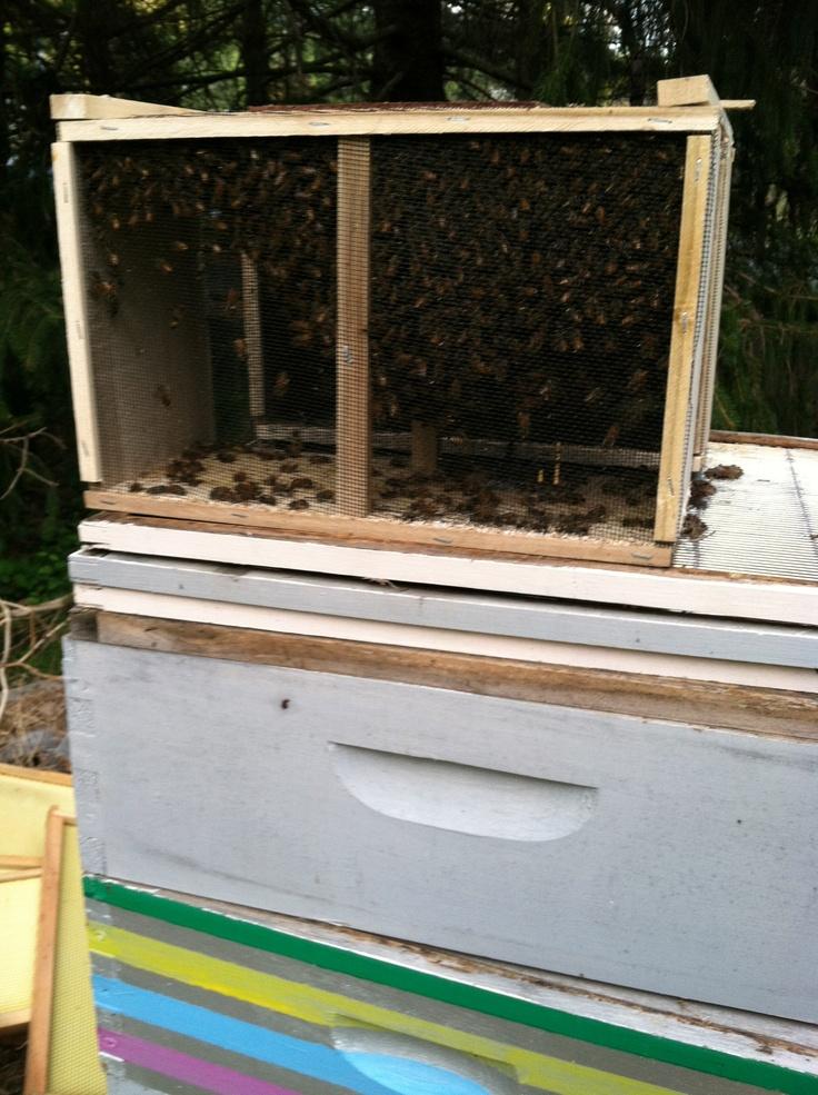 new honeybees.