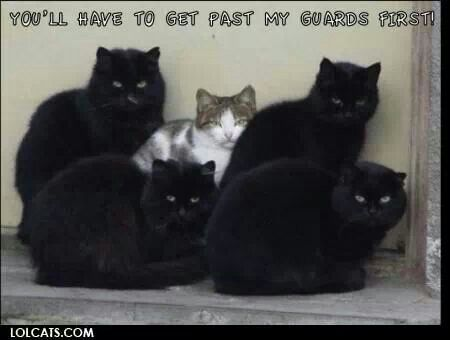Guard cats! | Cats,Dogs and other critters | Pinterest Omg Wtf Knock First