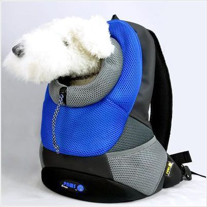 Pet backpack by crazy paws a carrier bag that lets you hold your pet