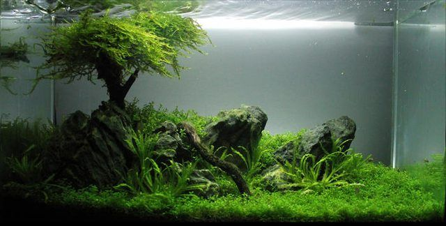 Aquascape with