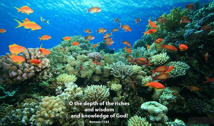 Bible verse of the day beautiful bible verse 39 s pinterest for Bible verses about fish