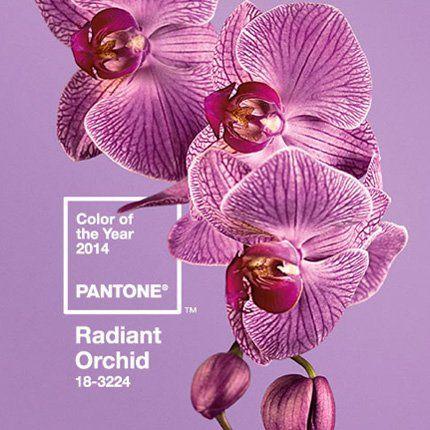 Radiant Orchid, couleur de l'année 2014 selon Pantone