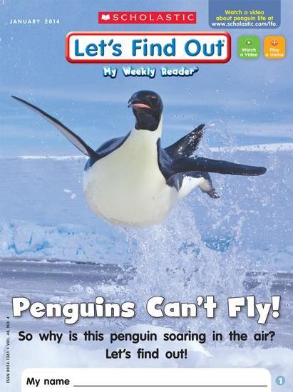 penguin can fly