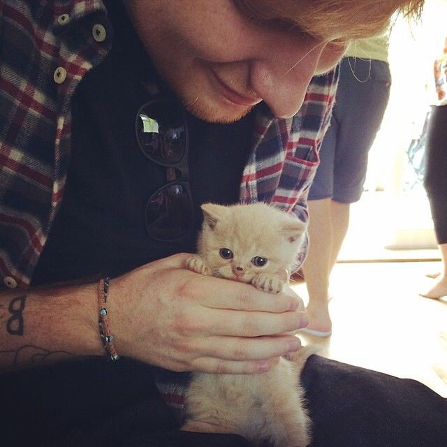 Ed Sheeran Perfect Video Cat