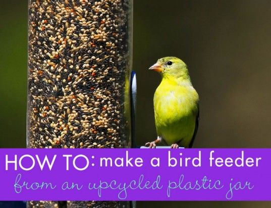 Diy how to make a bird feeder from a plastic bottle for How to build a bird feeder easy