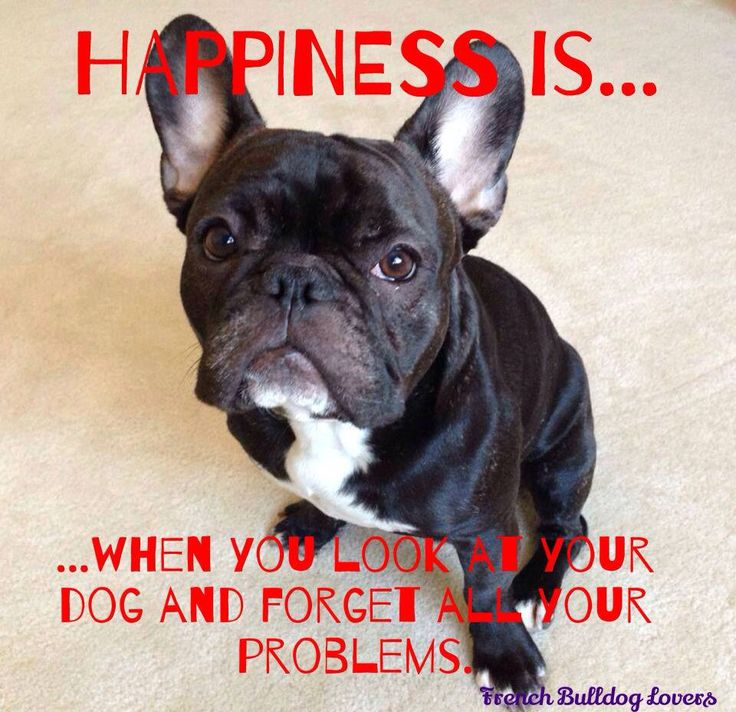 Happiness is...a Frenchie