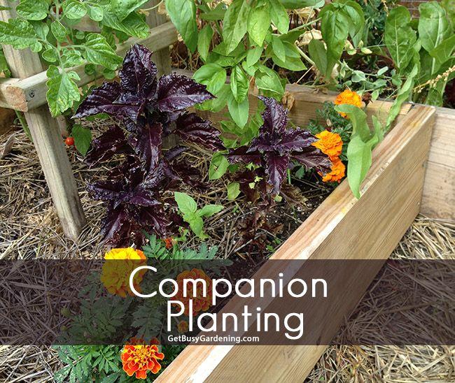 Companion Planting Places Spaces Gardening Pinterest