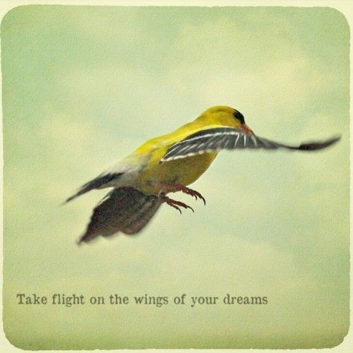 On the wings of your dreams inspiring words pinterest