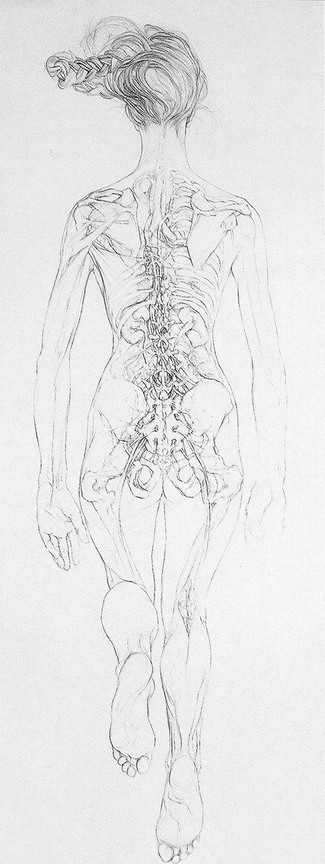 Fine Sarah Simblet Anatomy For The Artist Motif - Human Anatomy ...