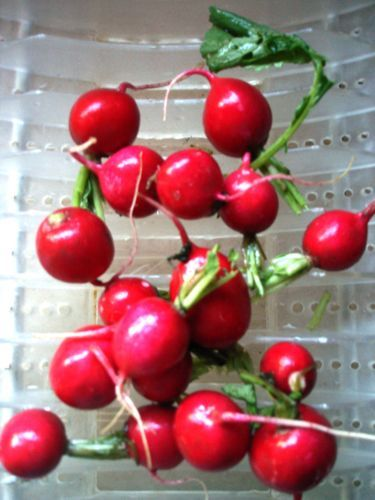 Pickled Radishes. | Recipes to Try | Pinterest