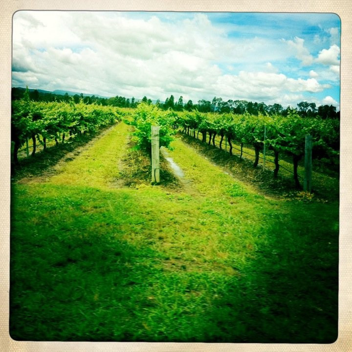 Hunter Valley Australia  city pictures gallery : Hunter Valley wine region, Australia | What a Wonderful World | Pinte ...