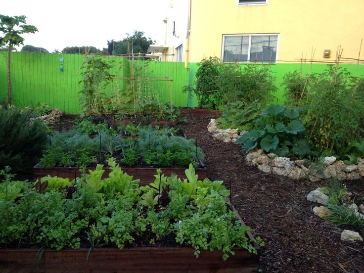 Edible Landscaping For Florida Victory Garden Pinterest