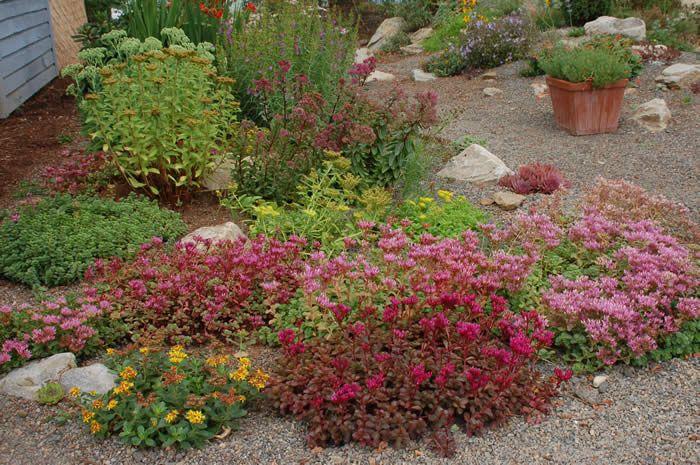 rock garden succulent garden Garden Pinterest