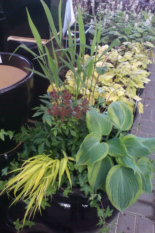 Perennial container for shade gardening pinterest - Container gardens for shade ...