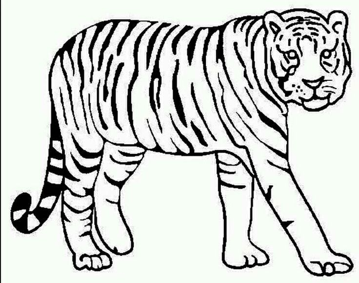 Coloring Page Tiger Animal Printable Pinterest Coloring Page Of A Tiger