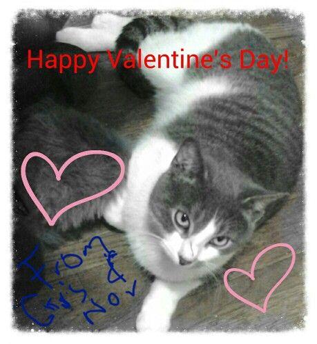 tom cat valentine day