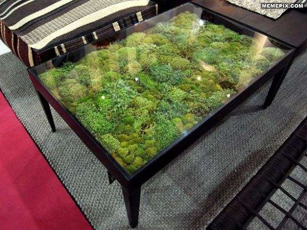 Coffee Table Terrarium Neat Pinterest