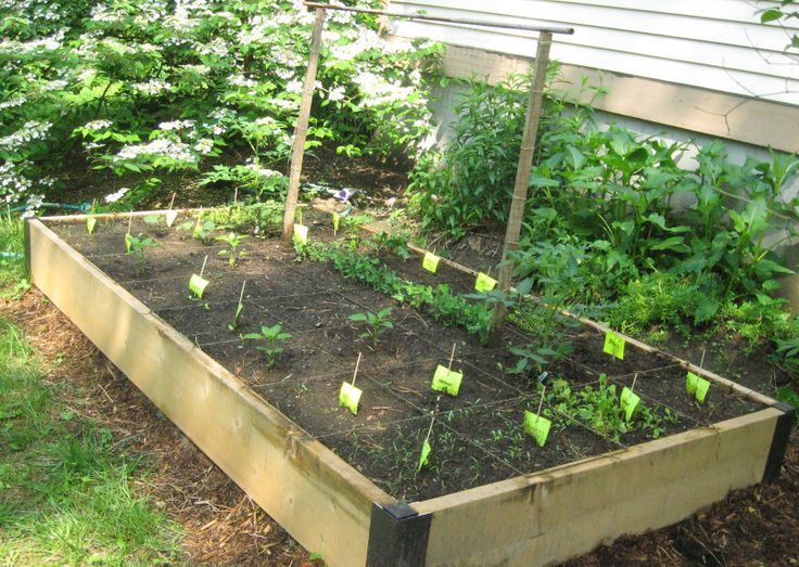 raised bed vegetable garden layout | Summer | Pinterest